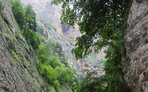 Picture greens, mountain, gorge