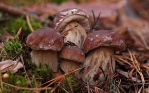 Picture forest, nature, mushrooms, moss