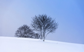 Picture winter, snow, trees, slope