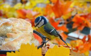 Picture Autumn, Bird, Autumn, Bird