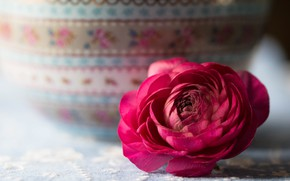 Picture Flower, Bud, Pink, Ranunculus