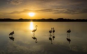 Picture sunset, birds, lake, Flamingo