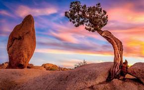 Picture the sky, sunset, stones, tree, CA, USA, lump, Joshua Tree National Park