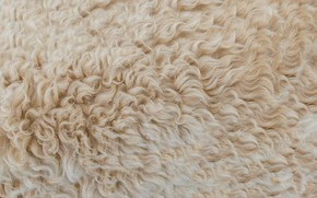 Picture texture, wool, skin