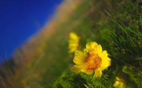 Picture field, flower, macro