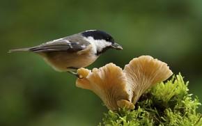 Picture bird, mushroom, moss