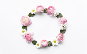 Picture flowers, chamomile, pink, pink, flowers, peonies, peonies, camomile, frame, floral