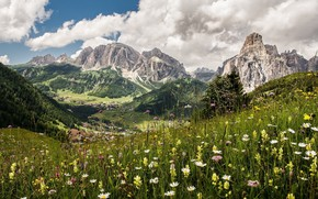 Picture flowers, mountains, meadow