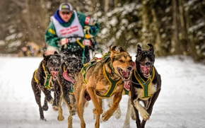Picture dogs, running, sport