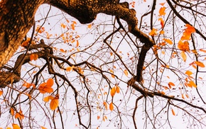Picture autumn, leaves, tree, branches