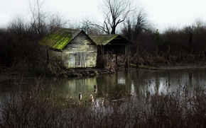 Picture nature, pond, house