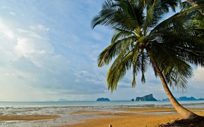Picture sand, sea, wave, beach, summer, the sky, palm trees, shore, summer, beach, sea, seascape, beautiful, ...