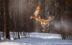 Wallpaper jump, in the air, winter, flight, snow, bokeh, dog