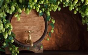Wallpaper hops, tap, barrel, beer