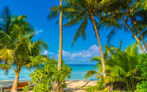 Picture beach, summer, palm trees, Nature, Tropics