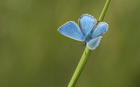 Picture macro, background, butterfly, a blade of grass