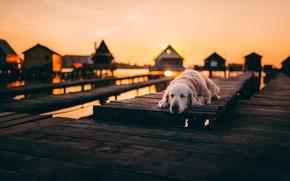Picture sunset, bridge, each, dog
