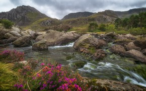 Picture trees, flowers, mountains, stream, stones, valley