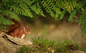 Picture nature, animal, moss, protein, fern