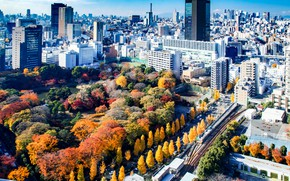 Picture autumn, trees, the city, the building, skyscrapers, panorama