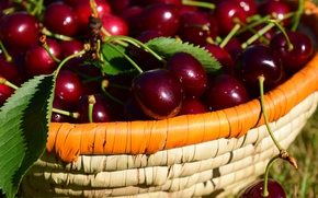 Picture leaves, nature, cherry, lights, berries, mood, basket, Shine, food, positive, harvest, basket, a lot, cherry, …