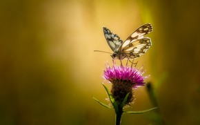 Picture flower, summer, macro, background, butterfly