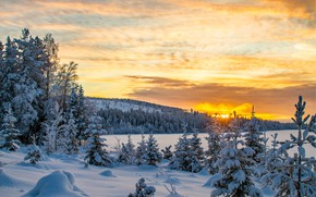 Picture winter, forest, sunset, the evening, Sweden