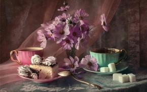 Picture tea, cake, sugar, kosmeya