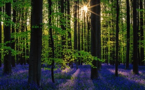 Picture forest, the sun, trees, flowers, nature, spring