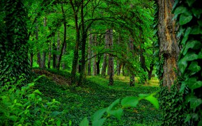 Picture Greens, Trees, Forest, Green, Forest, Trees
