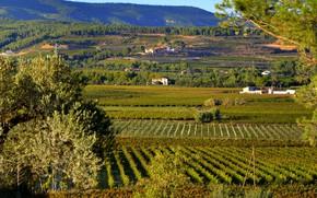 Picture greens, the sun, field, Spain, plantation, Sant Martí Sarroca
