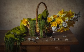 Picture cherry, basket, daffodils