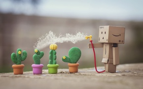 Picture cacti, Danbo, pours