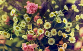 Picture flowers, pink, roses, chamomile, a bouquet of flowers, wildflowers