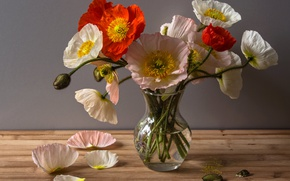Picture Maki, Vase, Petals, Vase, Poppies