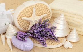 Picture flowers, soap, shell, flowers, bath, lavender, still life, lavender, candle, spa, salt, seashells