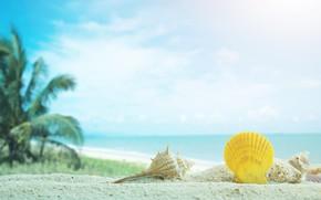 Picture sand, sea, beach, palm trees, shell, summer, beach, sea, sand, marine, palms, tropical, seashells