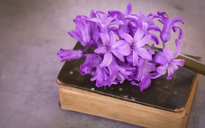 Picture macro, flowers, close-up, retro, background, petals, cover, book, lilac, composition