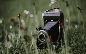 Picture grass, background, camera
