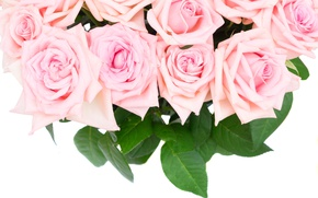 Picture roses, bouquet, pink, flowers, roses, pink roses