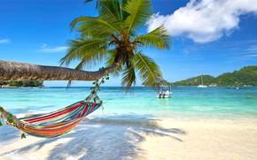 Picture sand, sea, beach, the sun, palm trees, shore, hammock, summer, beach, sea, island, sand, paradise, …