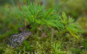 Picture macro, frog, weed