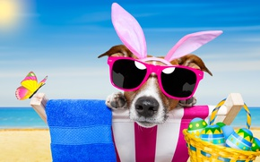 Wallpaper beach, butterfly, dog, glasses, happy, beach, dog, Easter, eggs, funny, vacation, sunglasses, bunny ears