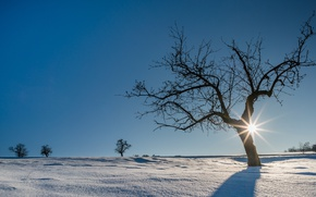 Picture winter, the sun, snow, trees, Germany, The black forest