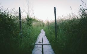 Picture grass, bridge, nature