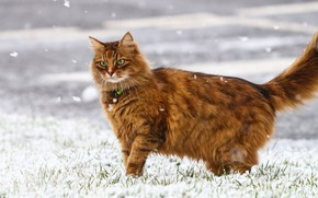 Picture winter, cat, snowflakes, wool