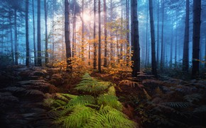 Picture autumn, forest, the sun, rays, light, trees, nature, fog, fern, Adnan Bubalo