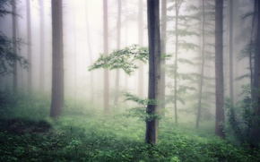 Wallpaper forest, nature, fog