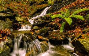Picture autumn, leaves, stones, foliage, waterfall, Spain, fern, cascade, Spain, Basque Country, Basque Country