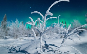 Picture forest, branches, night, bokeh, Northern lights, winter, nature, North, snow, light